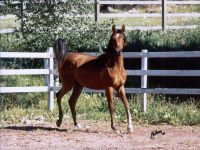 salaterka_yearling
